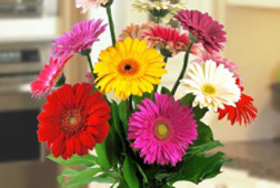 Colourful Fresh Gerbera Vase